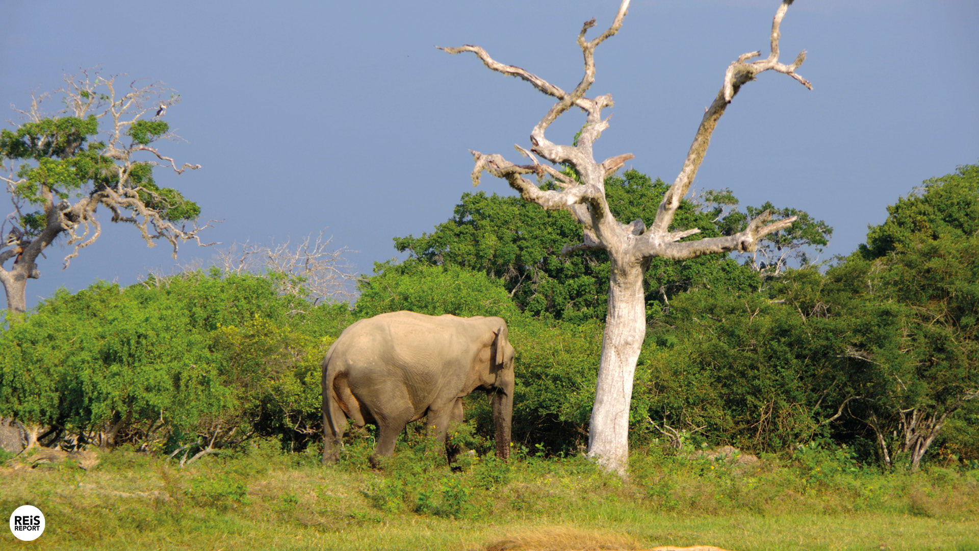 Jeepsafari Yala National Park cover